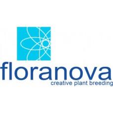 Floranova